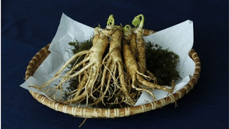 Ginseng Benefits for Female Athletes