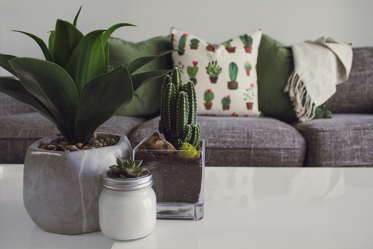 Ways to Master the Art of Taking Care of Indoor Plants